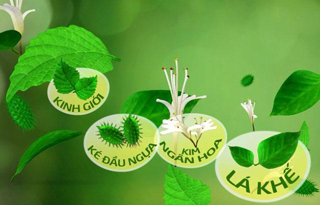 cách chữa dị ứng da bằng thảo dược tự nhiên