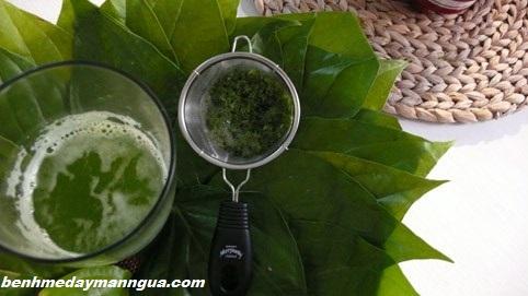 meo-chua-ngua-vung-kin-bang-la-trau-khong (1)
